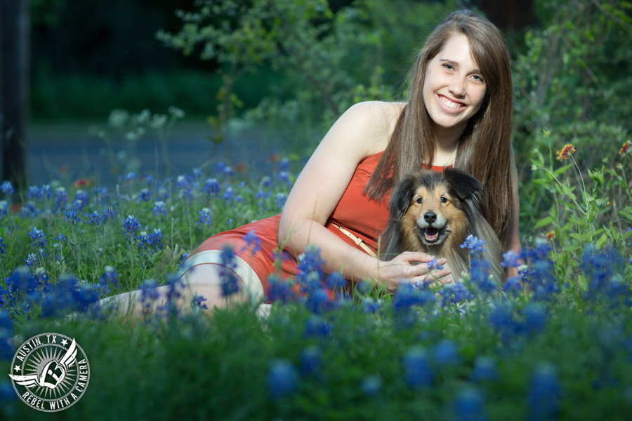 Longhorn graduation pictures in burnt orange sundress with miniature collie in the bluebonnets